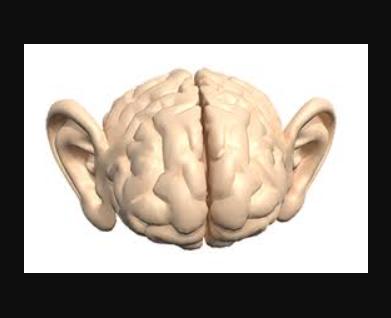 سمعک مغز توانمند